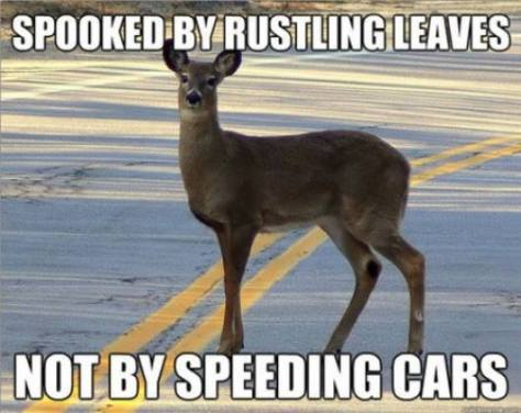 hunting-meme-deer